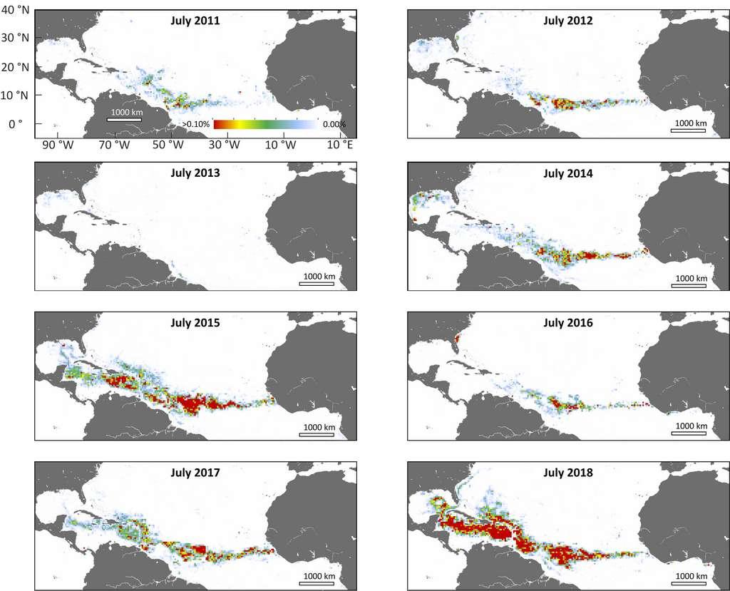 L'étendue de la Grande ceinture des sargasses de l'Atlantique s'accroît d'année en année depuis 2011. © Université de Floride du Sud