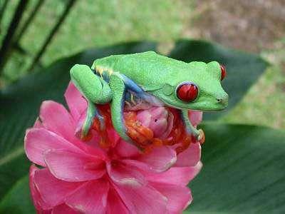 De nombreuses hormones sont mises en jeu lorsque les grenouilles se métamorphosent de têtard en adulte. Elles sont donc extrêmement sensibles aux substances qui perturbent le fonctionnement des hormones.