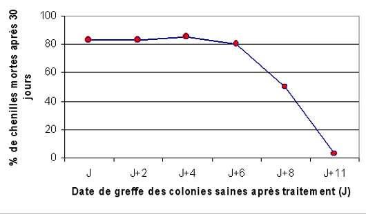 Graphique 3 : évaluation de la persistance d'action du Bt par greffe successive de colonies saines. © DR