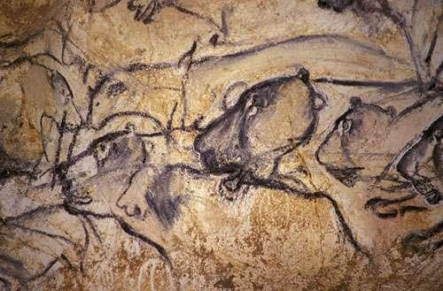Fig. 7. Les félins sont aussi très nombreux pendant l'Aurignacien, au début de l'art des cavernes. Grotte Chauvet. © Cliché J. Clottes. Tous droits réservés
