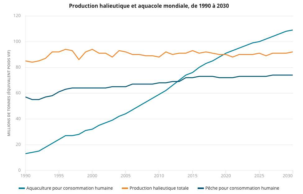 L'aquaculture représente désormais plus de la moitié du poisson consommé dans le monde. © FAO