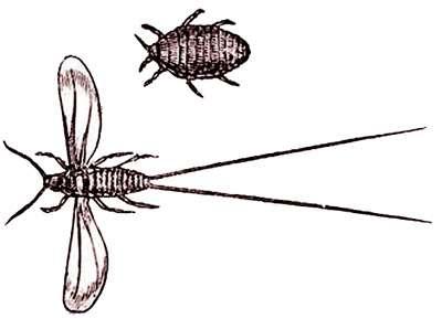 La cochenille est un animal. © DR