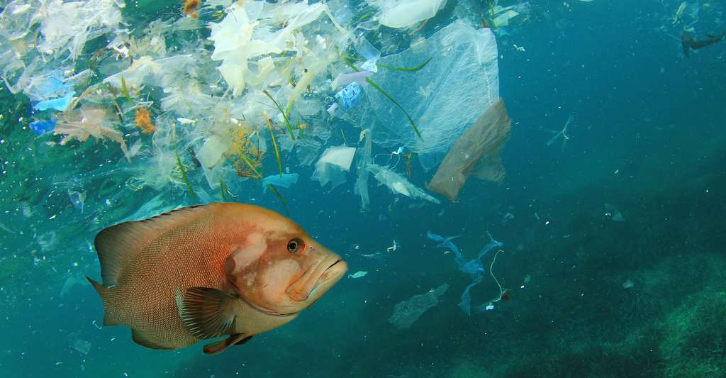 Certains microplastiques que l'on retrouve dans la nature sont des additifs de détergents, de produits cosmétiques ou de dentifrices. D'autres sont issus de la dégradation des déchets plastiques sous l'action des micro-organismes ou des ultra-violets. © Tunatura, Fotolia