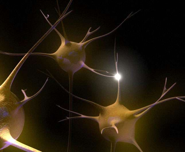 Vue d'artiste de la connexion entre un neurone et une synapse. Les réseaux neuronaux sont le socle de la mémoire cérébrale. © Emily Evans, Wellcome Images, Flickr, cc by-nc-nd 2.0