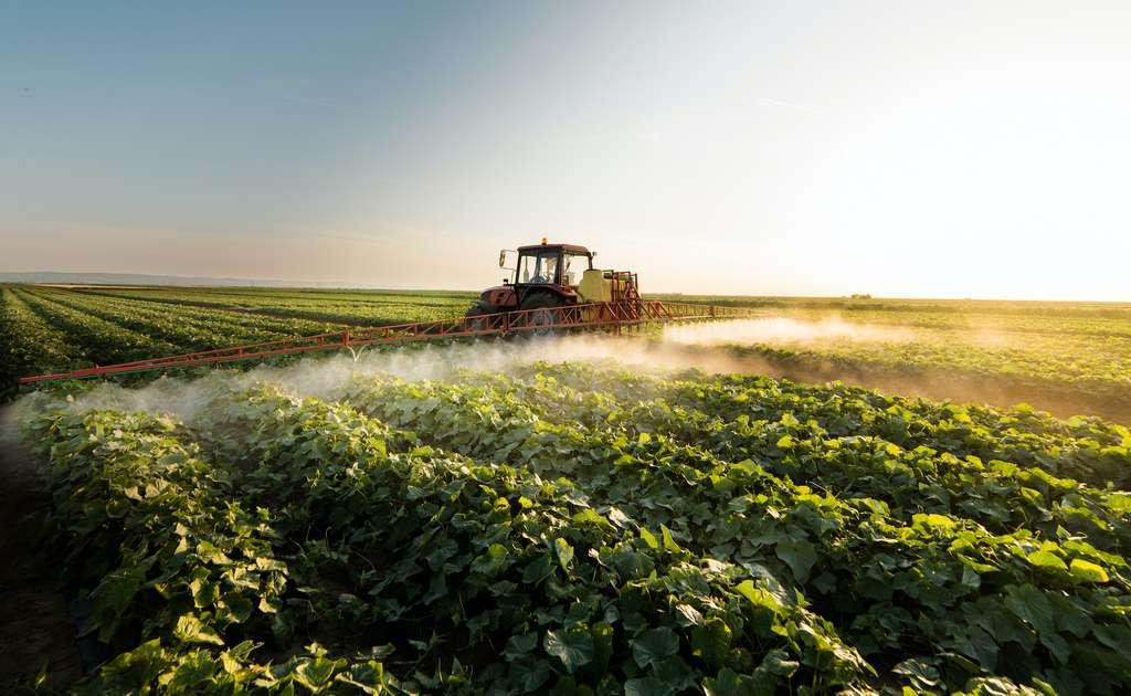 Les OGM permettent de réduire drastiquement la quantité et la fréquence des traitements chimiques. © Dusan Kostic, Adobe Stock