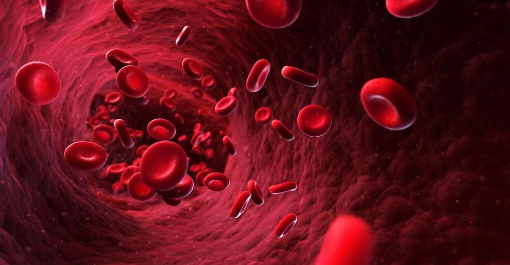 Le globule rouge est une cellule, il appartient donc au domaine micro. © Sebastian Kaulitzki, Shutterstock