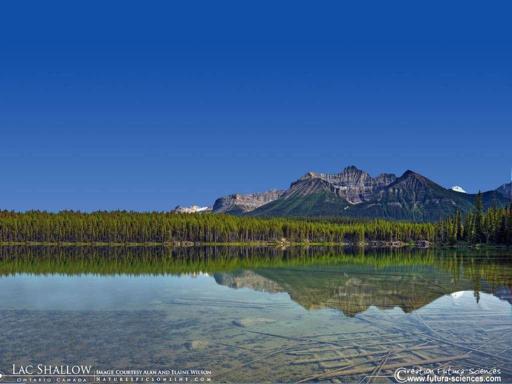 Ontario Lac Shallow