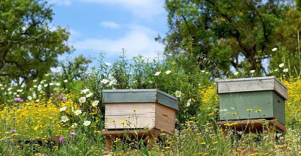 Des ruches au Portugal. © Inacio Pires, Shutterstock