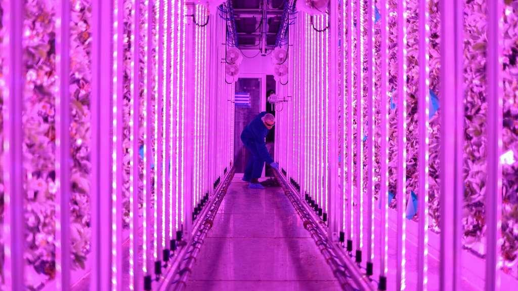 Dans les conteneurs maritimes transformés en fermes indoor, Guillaume Fourdinier et Gonzague Gru développent la technologie de l'aéroponie, une forme de culture hors-sol, et sans pesticides. © Agricool