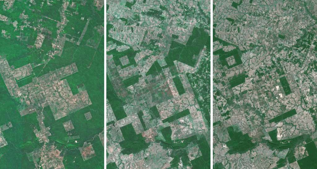 Trois images, prises par satellite, de la forêt amazonienne acquises respectivement en 1986, 1998 et 2005. La série illustre l'importance de la déforestation. © Cnes (distribution Spot Image)