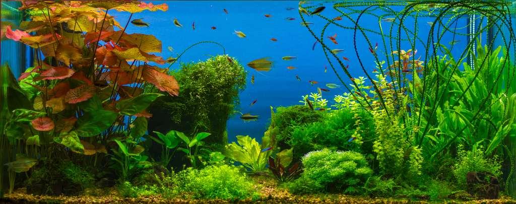 En plus de créer de magnifiques décors, les plantes aquatiques possèdent une fonction vitale pour les poissons. © Oleksii Fadieiev, fotolia