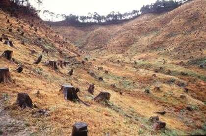 Déforestation illégale © FAO