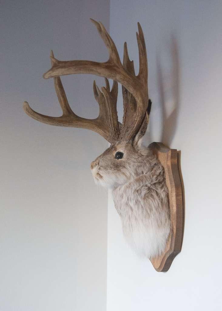 Exemple de jackalope empaillé. © Nedra, Flickr