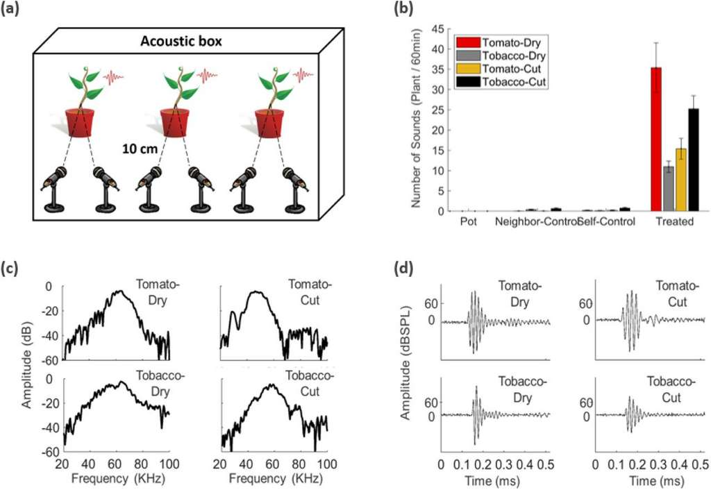 Le nombre de sons, leur fréquence et l'intensité varient selon la plante et le type de stress subi (sécheresse ou coupure de la tige). © Itzhak Khait et al, bioRxiv, 2019