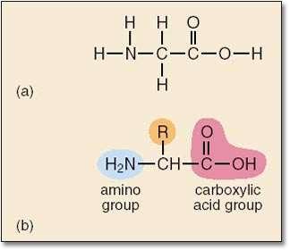 L'acide aminé le plus simple : la glycine : Crédit : Open University