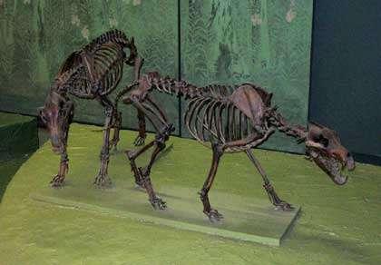 Canis dirus. © Postdif, Wikipedia