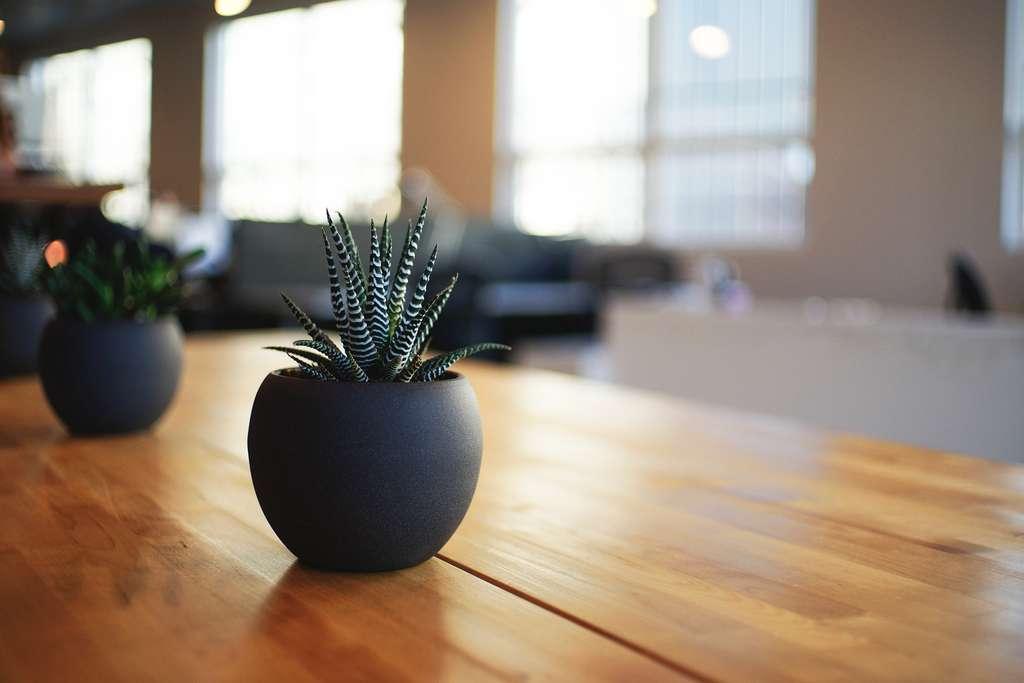 Pour embellir son intérieur, quelques plantes vertes, faciles à entretenir, ajouteront une touche décorative. © Pixabay