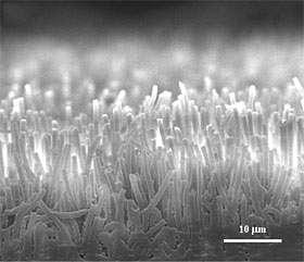 Vue latérale des microfibres de polypropylène. Chaque fibre est longue de 15-20 micromètres pour 0,6 micromètre de diamètre . Crédit : Jongho Lee/UC Berkeley