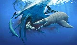Les mosasaures avaient des dents de requin
