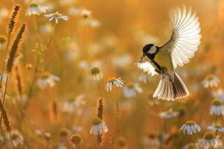 Biodiversité menacée en France : « Il faut changer de braquet »