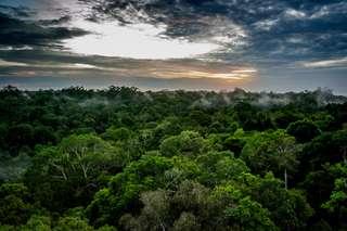 La forêt amazonienne du Brésil émet plus de CO2 qu'elle n'en capture depuis 10 ans