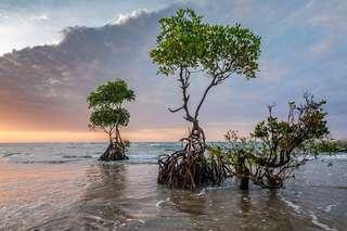 a5fee4c557_50175029_14-mangrove-sunset-2947819-1920fsca.jpg