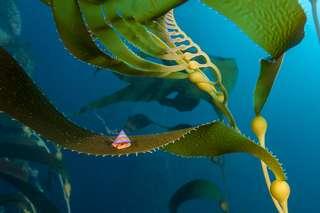 Les plus belles photos sous-marines de l'année !