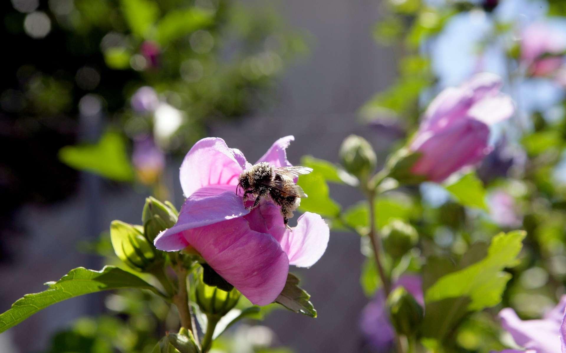 L'entomophobie est la peur intense et irrépressible des petits insectes. © Phovoir