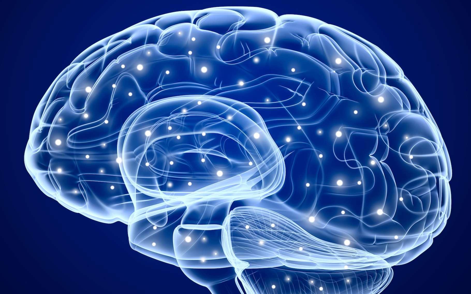 Grâce à des memristors, des chercheurs sont parvenus à reproduire artificiellement certaines fonctions essentielles au développement de l'intelligence dans le cerveau humain. © Alex Mit, Shutterstock