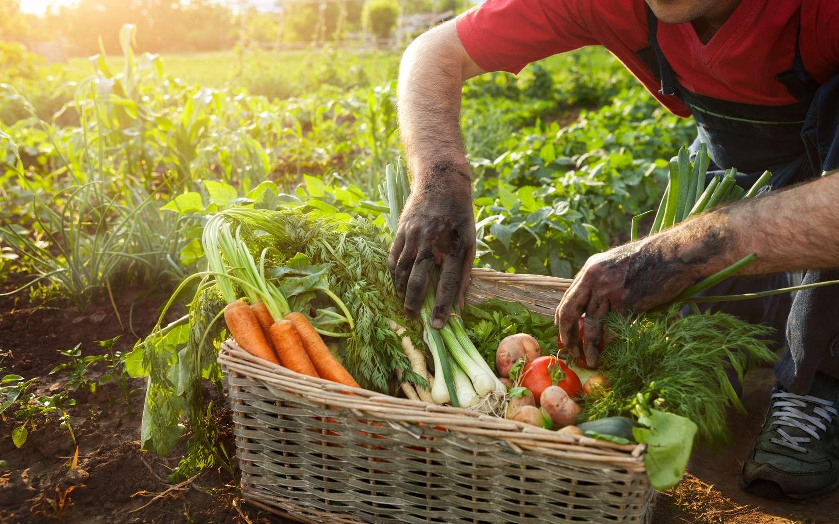 Les produits bios ne sont pas systématiquement meilleurs pour la santé. Cependant, ils participent au principe de précaution sanitaire et protègent davantage l'environnement. © Cherries, fotolia