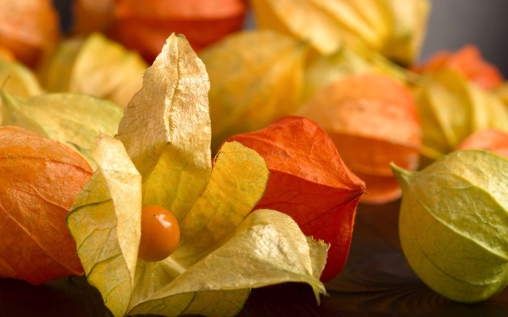 L'Inca Berry est le fruit du coqueret du Pérou, une plante qui fait partie de la famille des solanacées, comme la tomate ou la pomme de terre. © leonid_shtandel, Fotolia