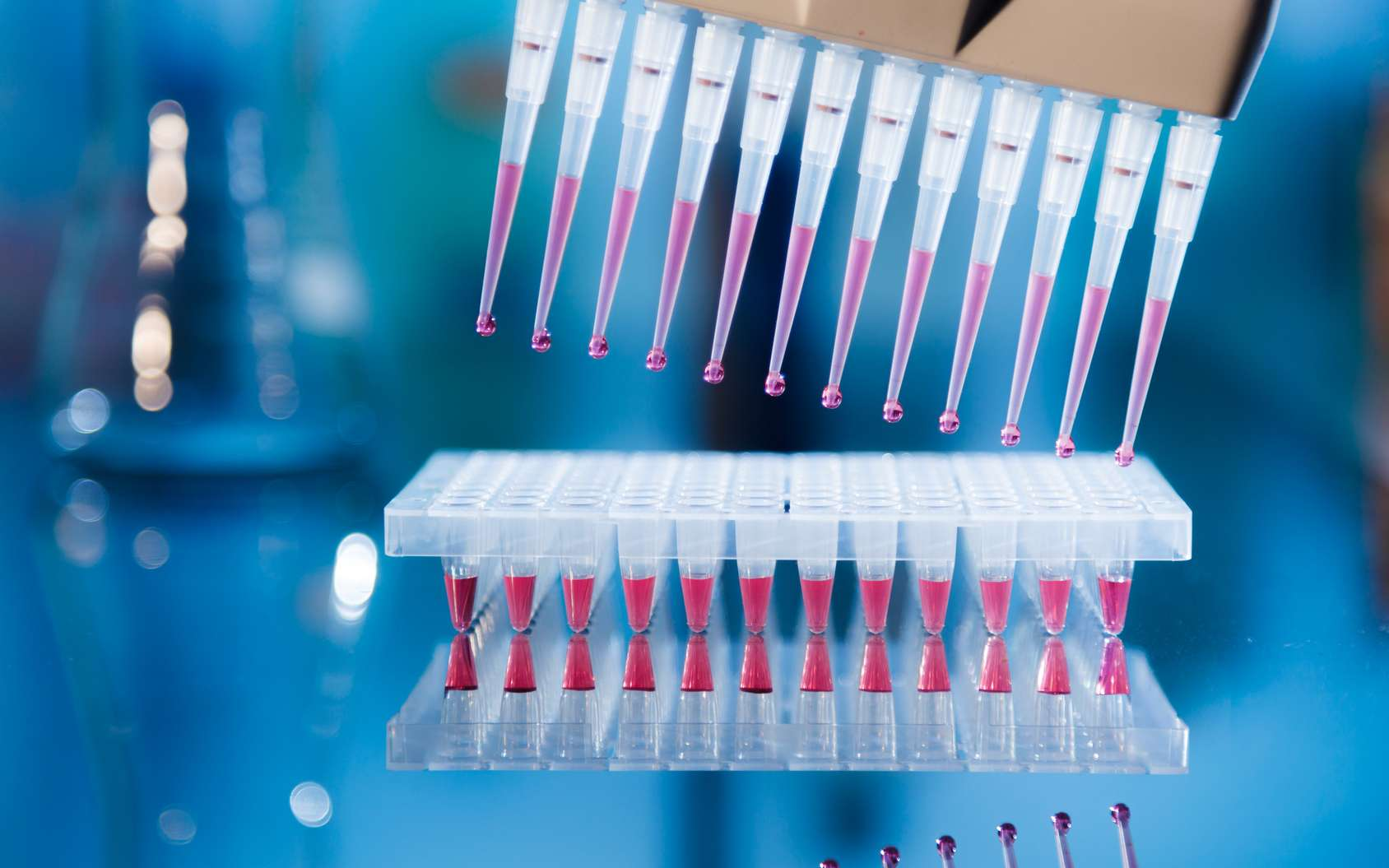 L'amplification ADN par PCR (Polymerase Chain Reaction) © science photo - Fotolia