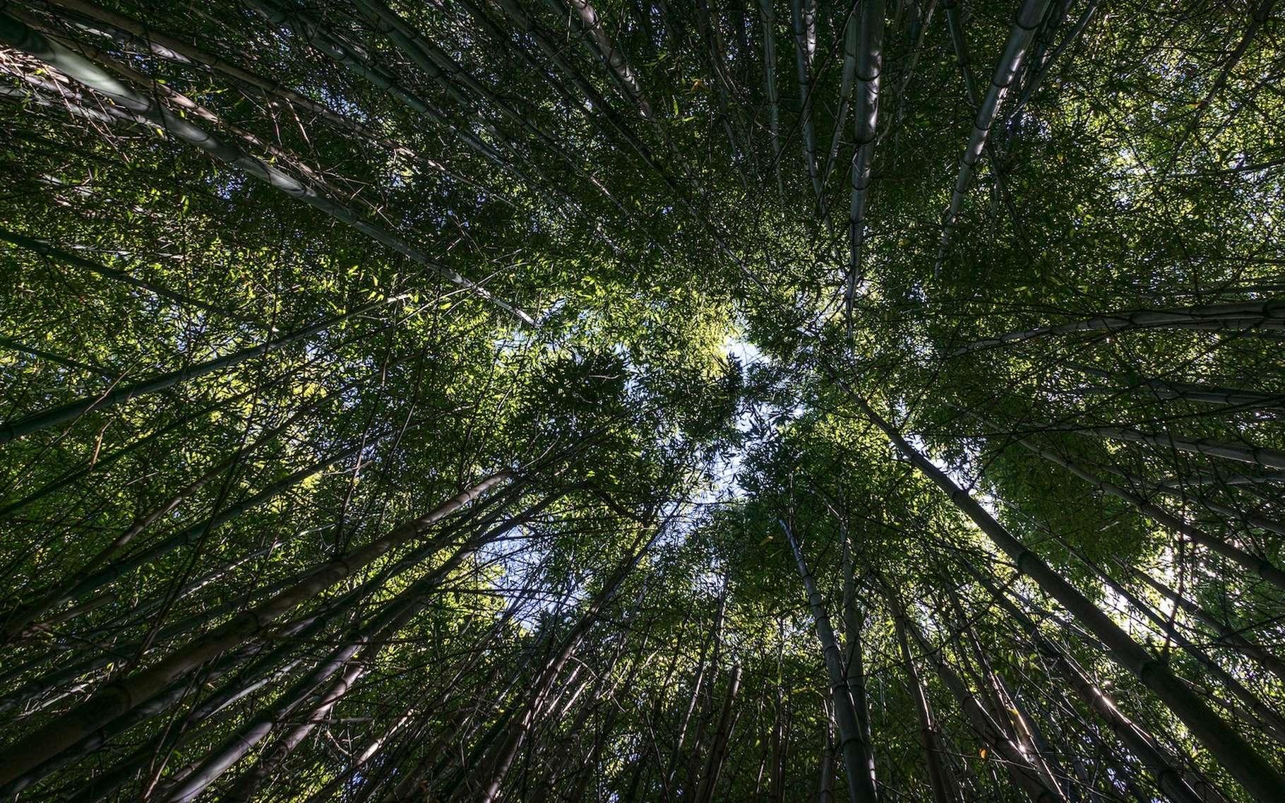La vie sur Terre pèse quelque 550 gigatonnes de carbone stocké. Et les plantes, pas moins de 450 gigatonnes. © Stefan Steinbauer, Unsplash