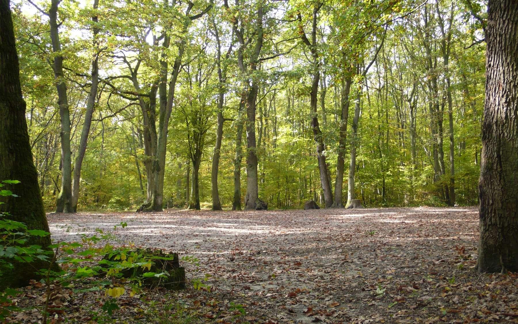 Les forêts des régions tempérées (ici une chênaie-hêtraie d'Île-de-France) représentent 22 % du nombre d'arbres dans le monde. © Jean-Luc Goudet, Futura-Sciences
