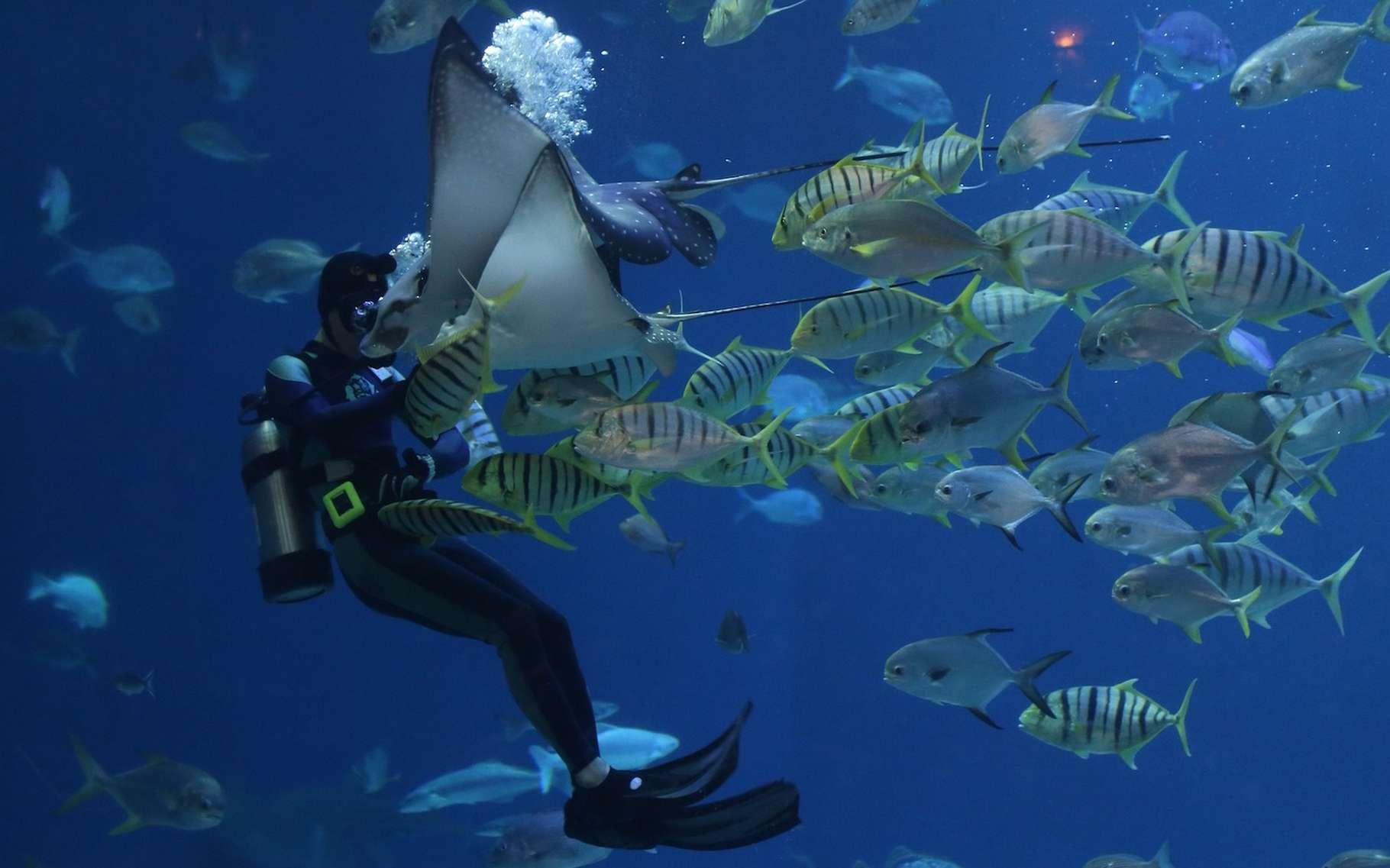 Pour les espèces, perdre en diversité génétique signifie perdre en capacité d'adaptation à un environnement changeant. Et en la matière, insectes et poissons seraient les plus impactés par les activités humaines. © pieonane, Pixabay License