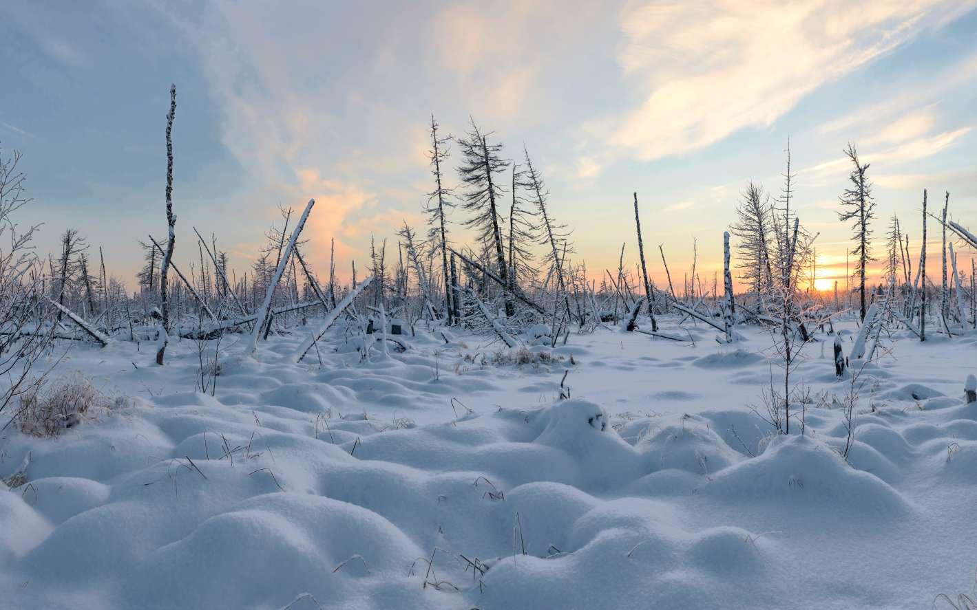 Les plaines de Sibérie étaient couvertes de neige durant les deux tiers de l'année à l'époque où les lions des cavernes occupaient ce territoire. © vladi_mir, Adobe Stock