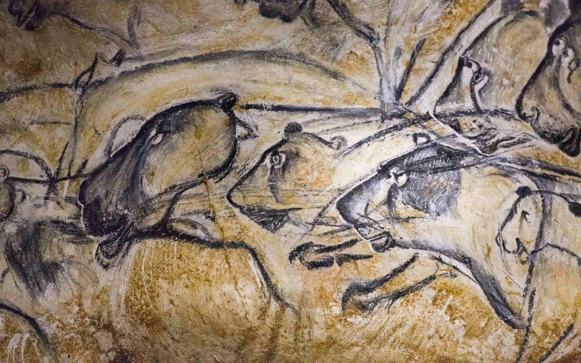 Lions des cavernes peints sur les parois de la Grotte Chauvet. © Grotte Chauvet