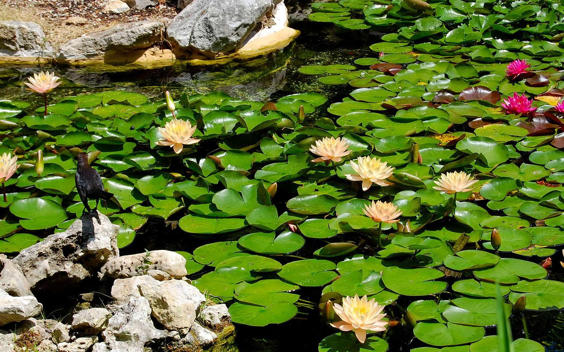 Construire Son Bassin De Jardin l'entretien du bassin de jardin mois par mois | dossier