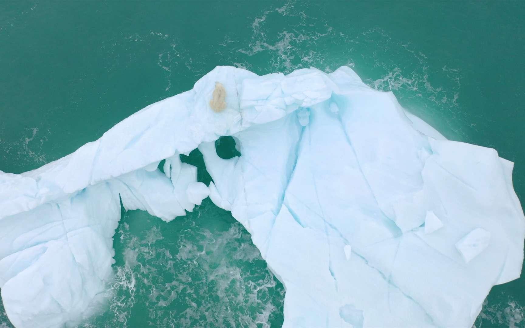 Un ours polaire se repose sur un iceberg. © Florian Ledoux