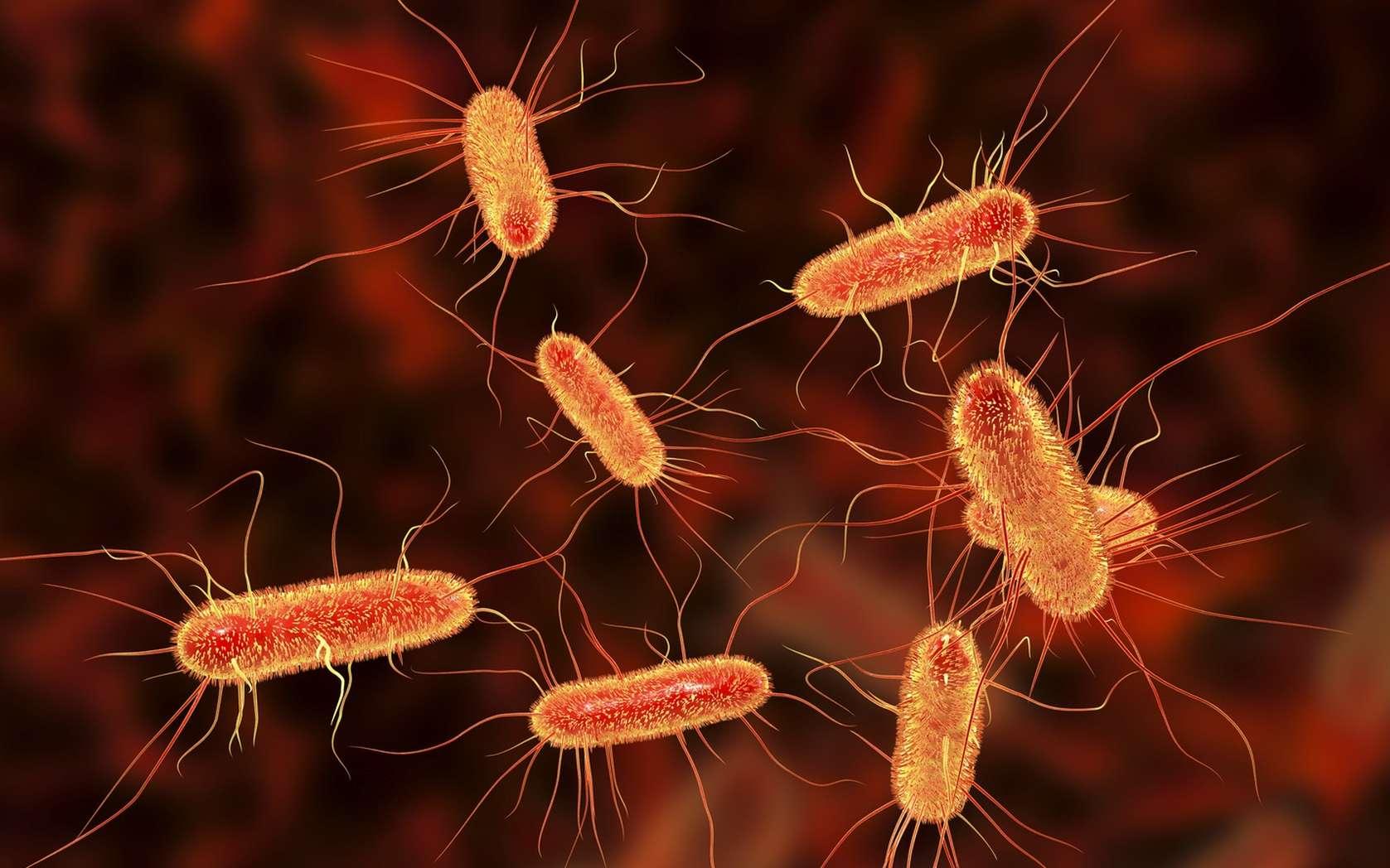 La bactérie modèle Escherichia coli ou colibacille fait partie de la famille des entérobactéries. © Kateryna_Kon, fotolia