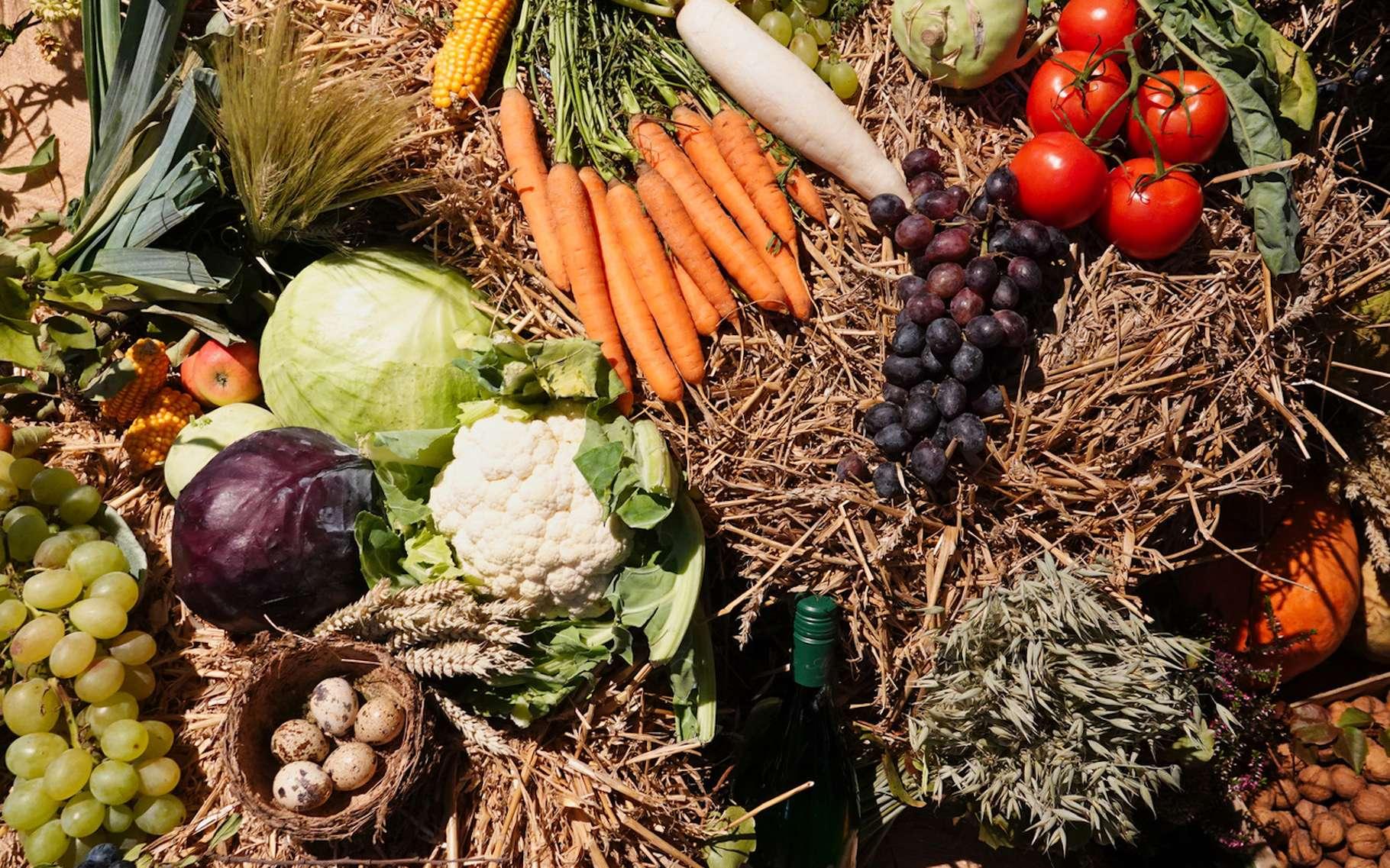 Selon des chercheurs français, manger bio pourrait bien nous aider à nous protéger contre les cancers. © eDiBella, Fotolia