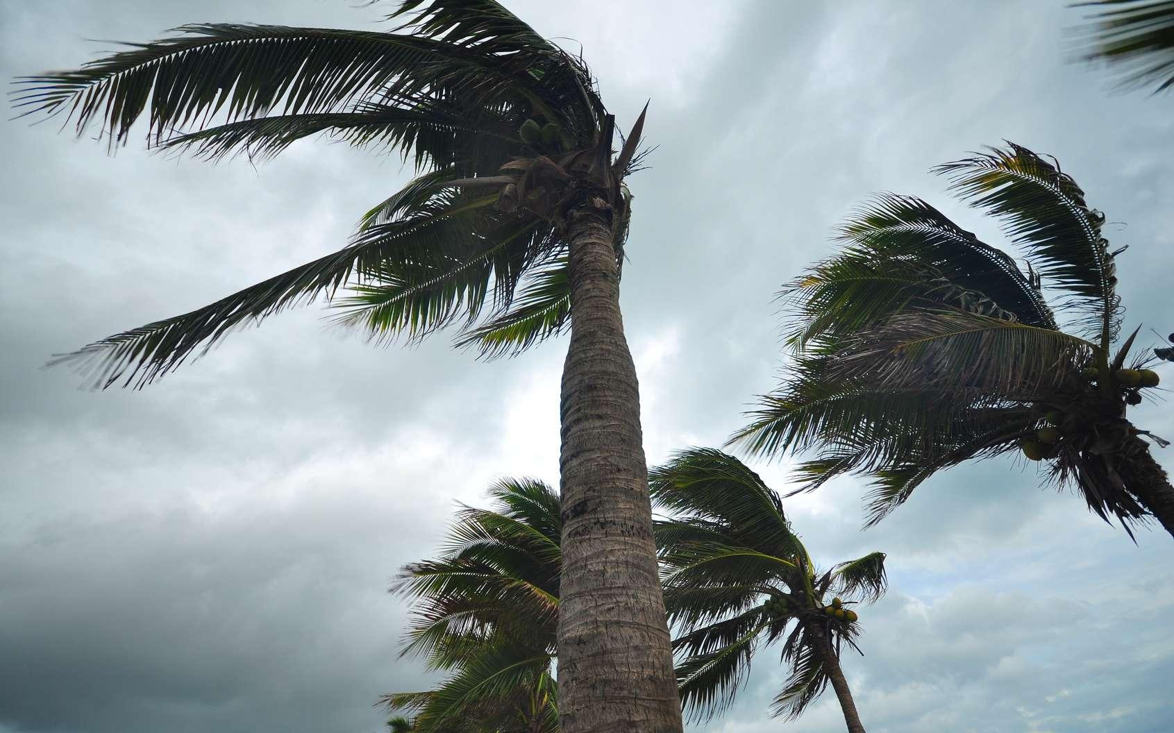 Comment se forme le vent ? © behindlens, fotolia