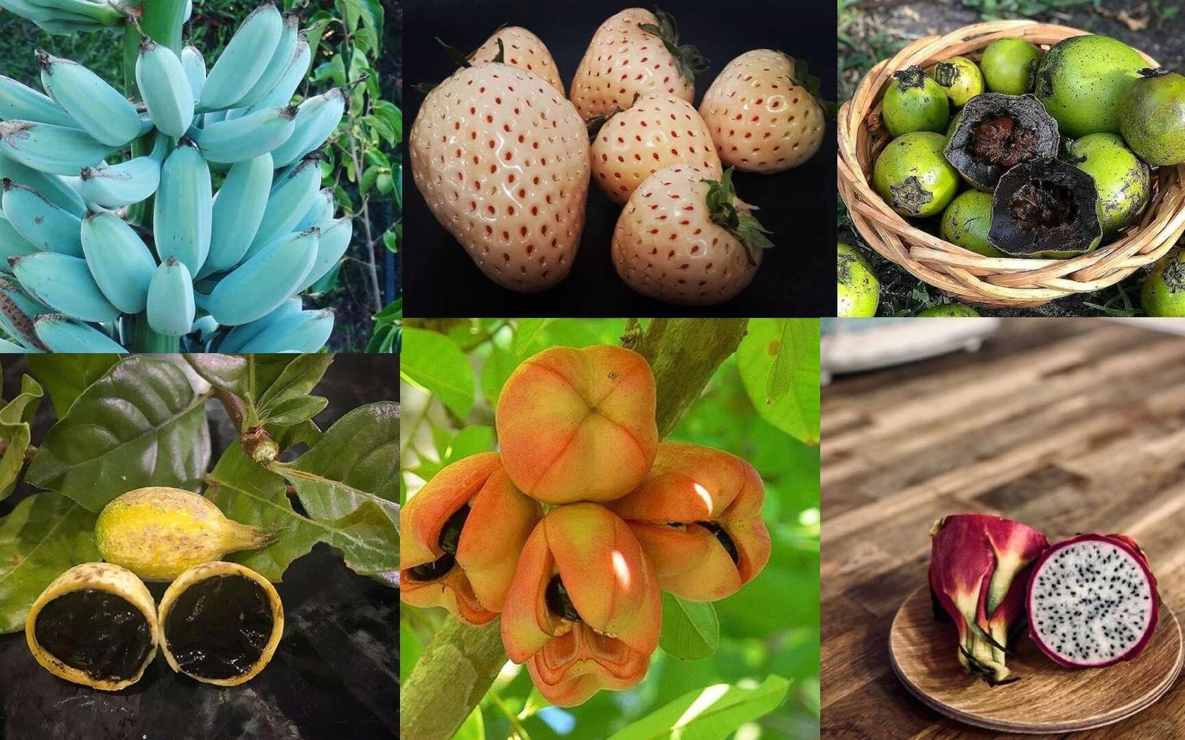 Un fruit au goût de chocolat ou de glace à la vanille, c'est possible ! © Instagram