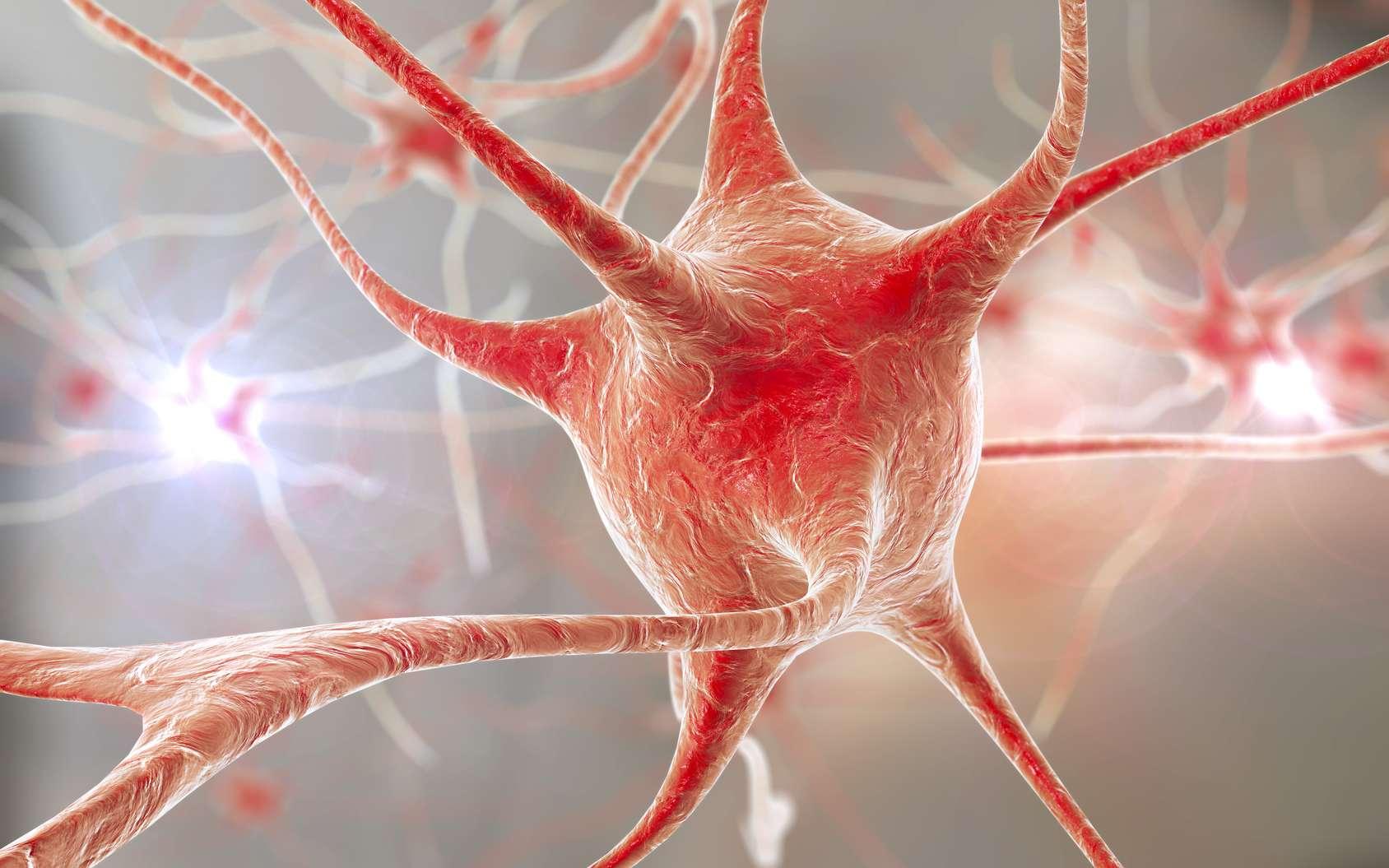 Faire pousser un mini-cerveau, c'est possible ! Pour travailler facilement sur un cerveau, il serait préférable de disposer d'un organe semi-artificiel mais suffisamment réaliste. Il est en effet possible de cultiver des neurones en trois dimensions pour reconstituer du tissu cérébral. © Kateryna_Kon, Fotolia