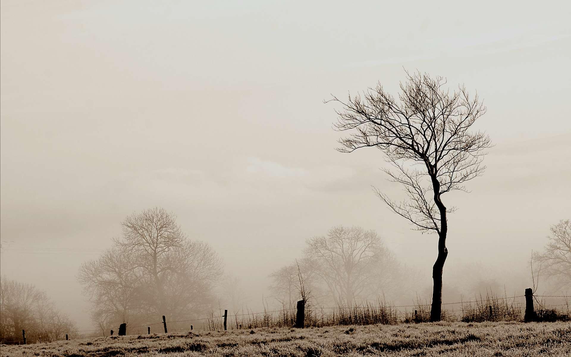 Gaz, fumée et brouillard (ce dernier est ici en photo) ne doivent pas être confondus. Ils présentent de grandes différences. © Phil, Flickr, CC by-nc-nd 2.0