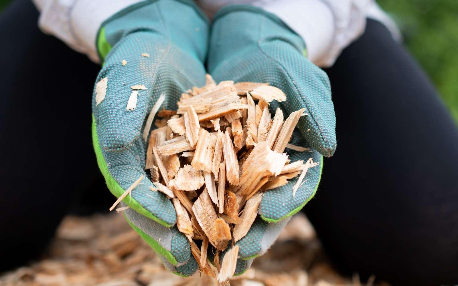 Le BRF, un paillis végétal à réaliser soi-même. © s-motive, Adobe Stock