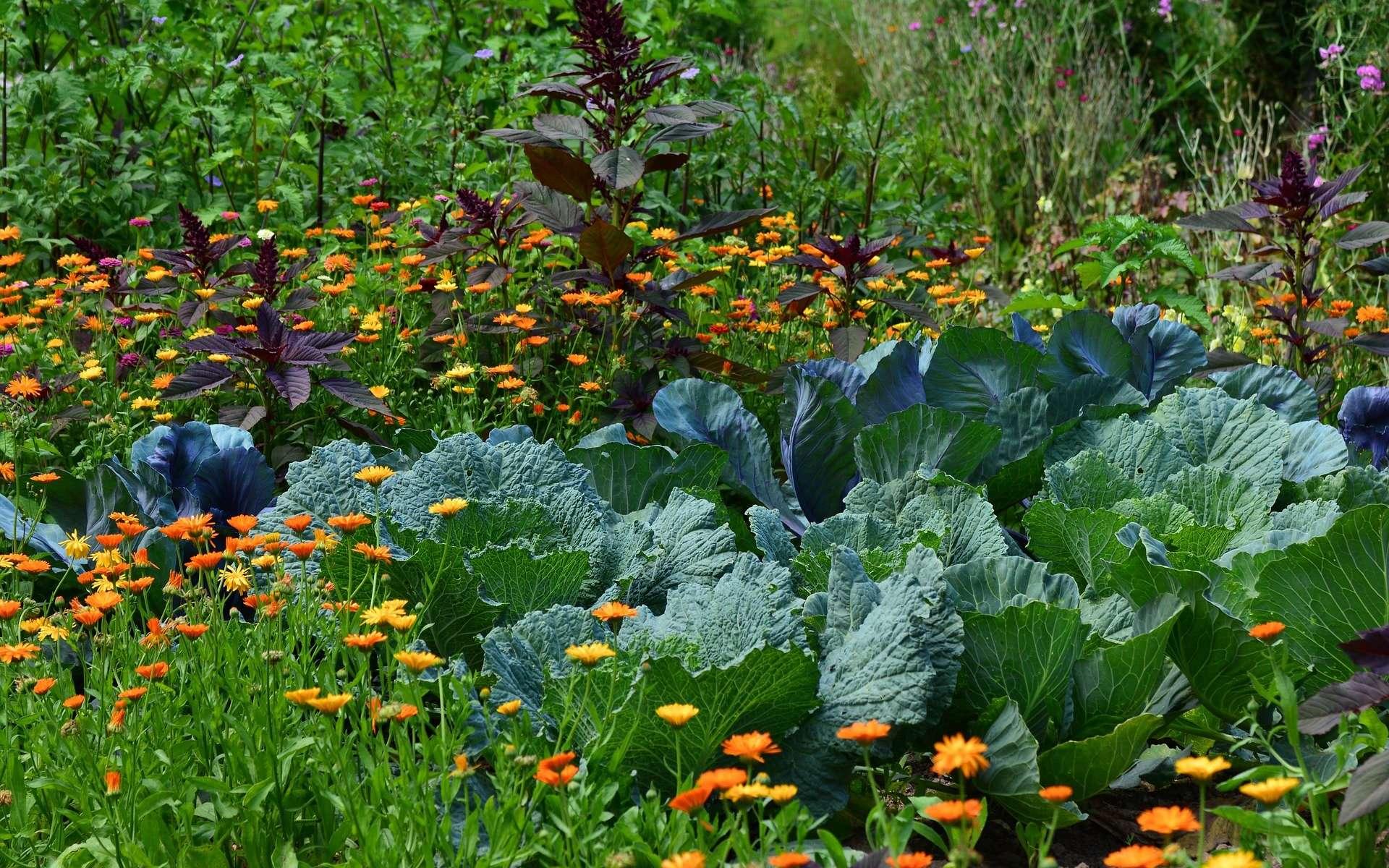 Vivre d'une forêt-jardin : le rêve de Charles Hervé-Gruyer pourrait faire des émules. © Congerdesign, Pixabay, DP