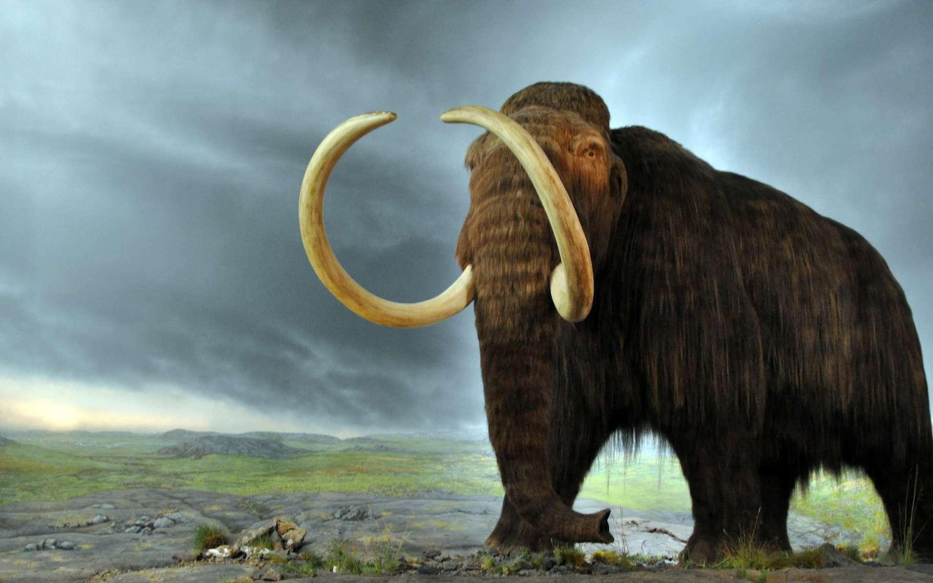Les vieux Sibériens du Nord, un nouveau groupe humain identifié récemment par des chercheurs, vivaient de la chasse aux mammouths, aux rhinocéros laineux et aux bisons. © Flying Puffin, Wikipedia, CC by-sa 2.0