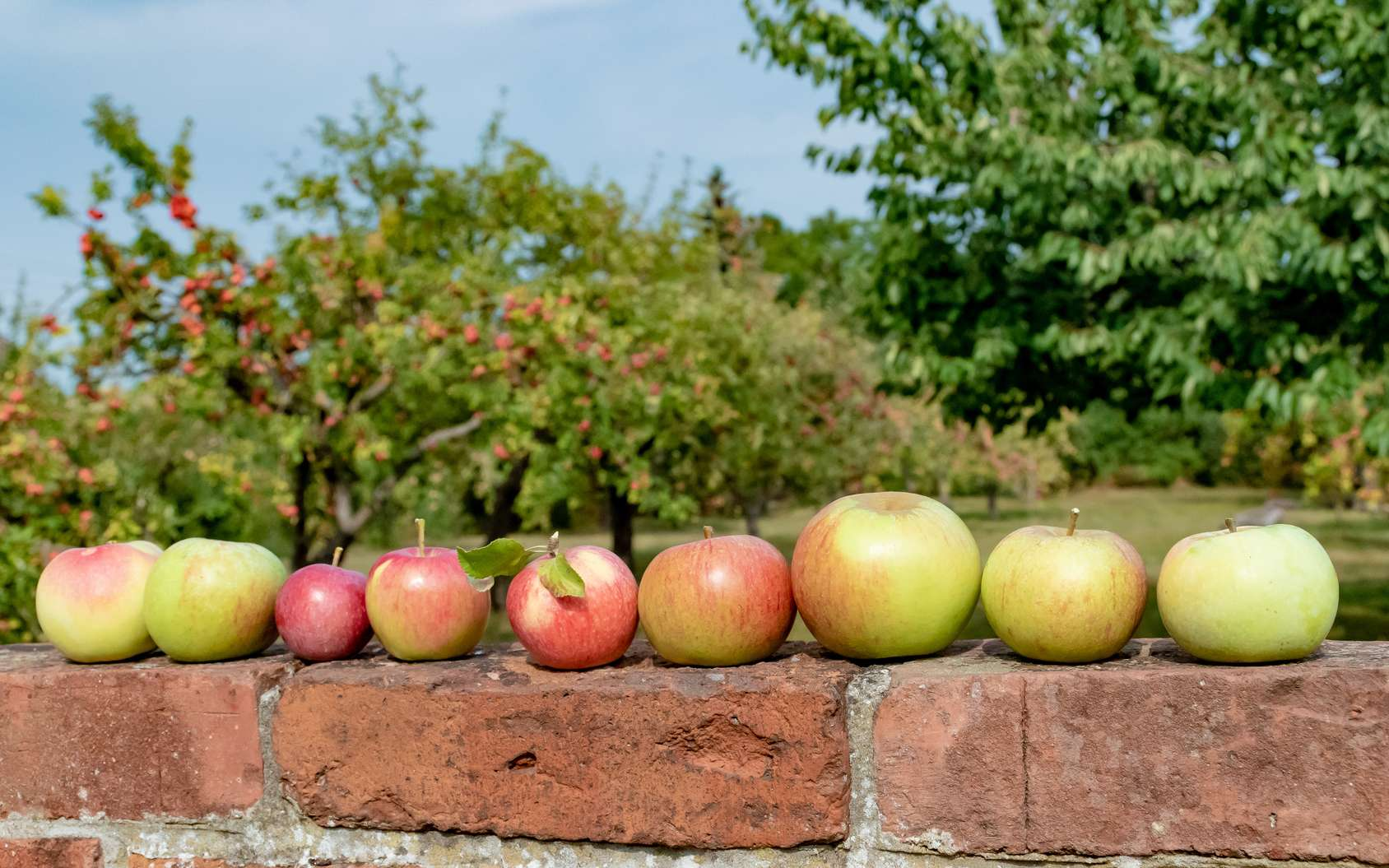 Comment Planter Un Arbre Fruitier comment réussir la plantation de vos arbres fruitiers ?