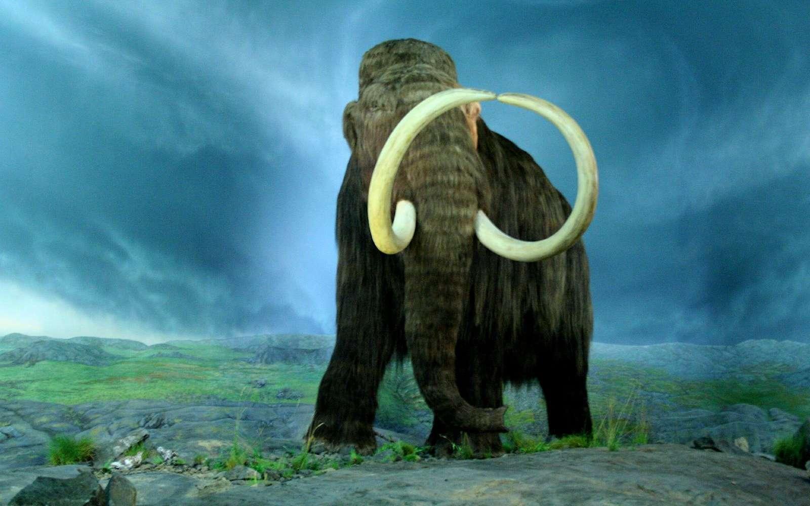 Les derniers mammouths se sont éteints il y a 4.000 ans. © Tracy O, Wikipédia, CC by-sa 2.0